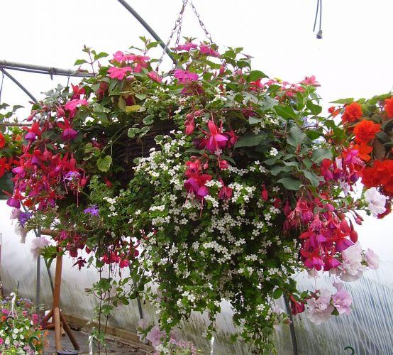 Hanging Basket Intratuin.Het Moederdag Aanbod Van De Grote Tuincentra