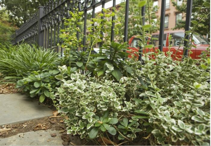 700_adrian-grenier-garden-2