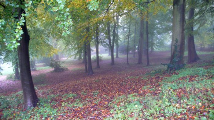 700_woods