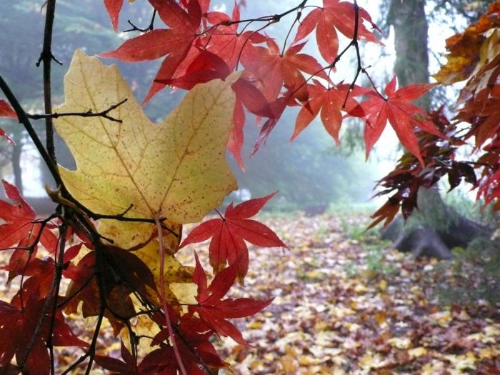700_yellow-leaf