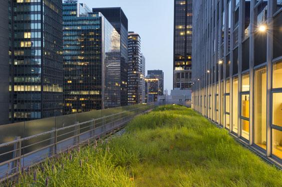 2_Grass-Meadow-Shot
