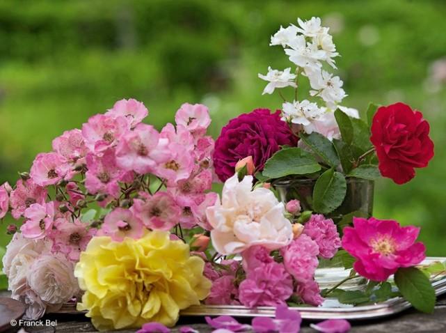Bouquet-de-rose_w641h478