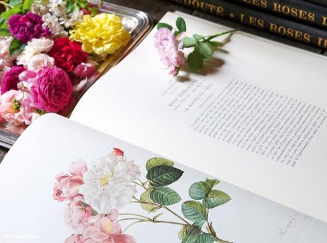 Les-roses-d-delcie_w641h478