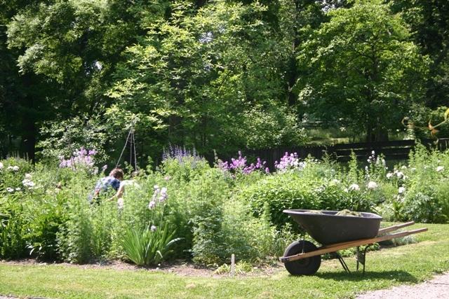 Summer-Common-Flower-Garden2
