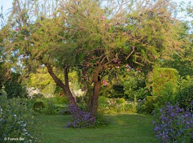 Veilchenblau-jardin-roses_w641h478