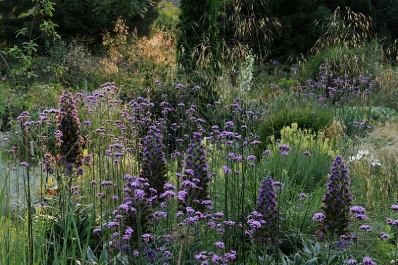 garden : Peter Janke