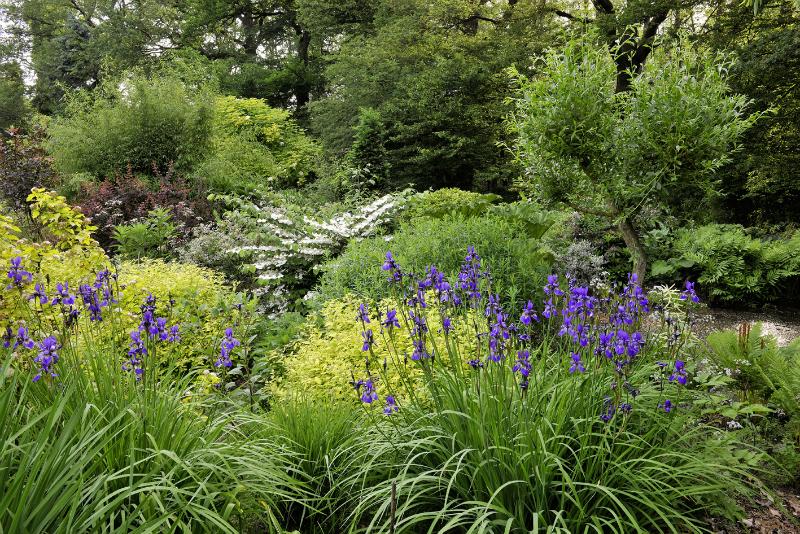 Idee kleine tuin welke vaste planten : Border-inspiratie tijdens het u2018Open tuinen weekendu2019 2013 ...