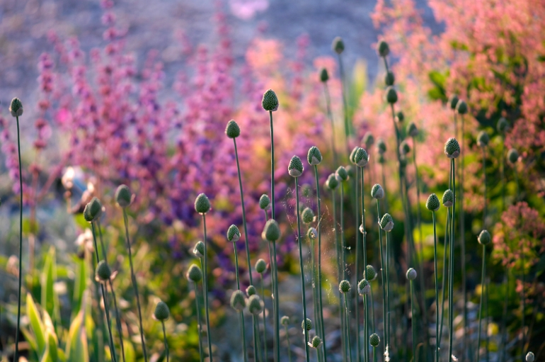 garden :Peter Janke D