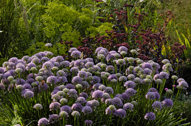 garden: Peter Janke D