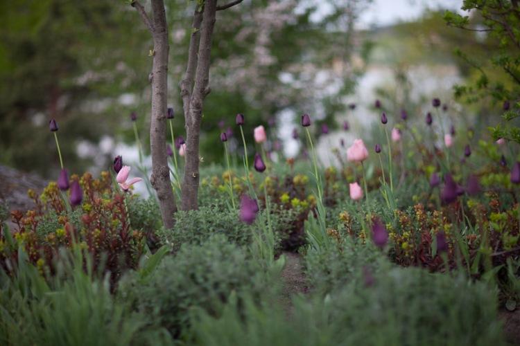 Tuin van Nordfjell in het Zweedse Olerup.