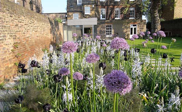 Veel Allium's in het ontwerp.