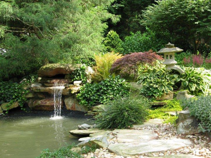 Vijvers brengen leven en rust in de tuin for Tuin en vijver