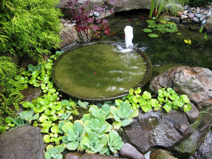 Vijvers brengen leven en rust in de tuin for Waterpartij in de tuin