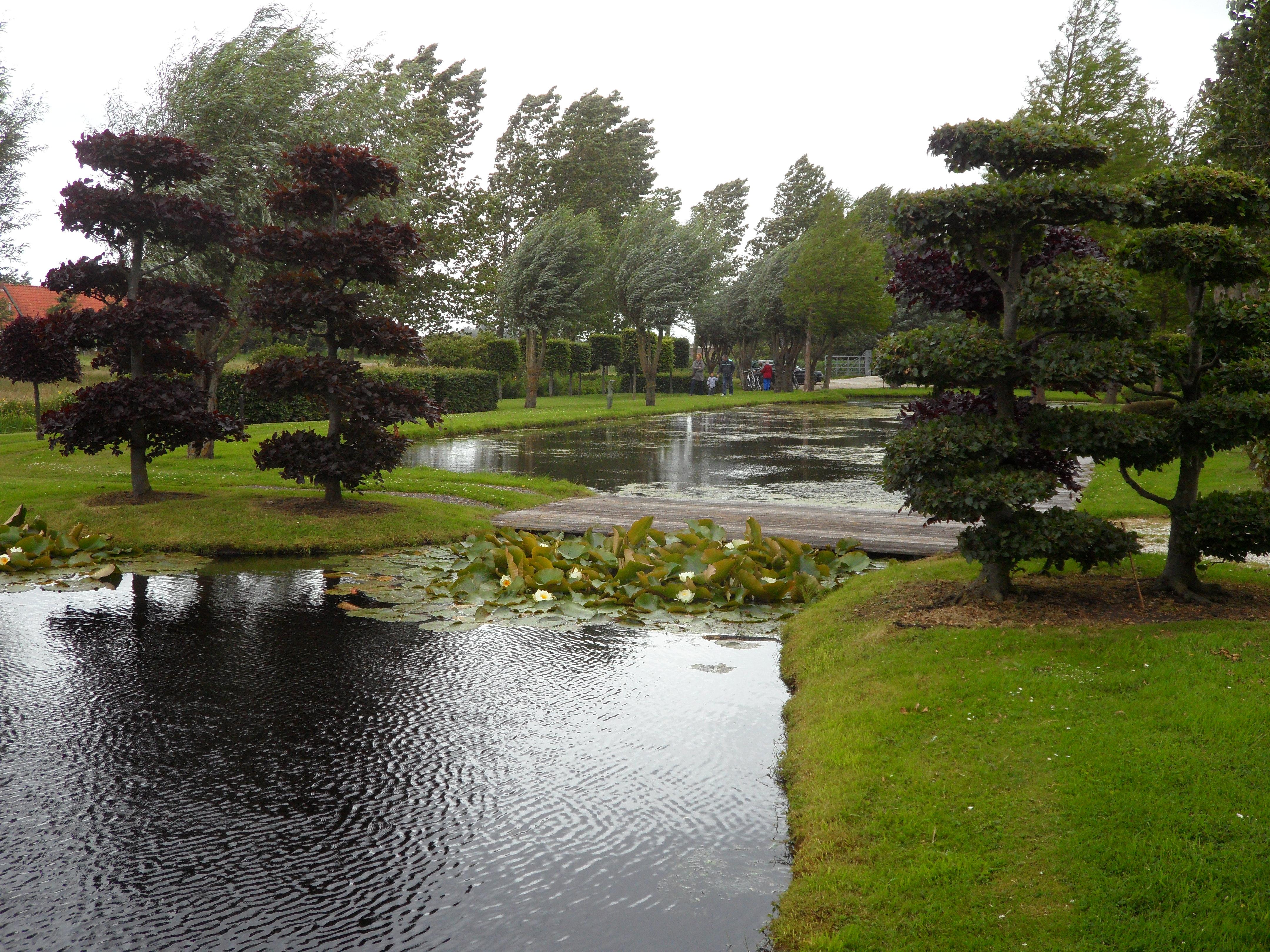 Groene daken en grote vijvers in spannende tuin van koelemeijer in zaanstad - Foto van tuin vijver ...