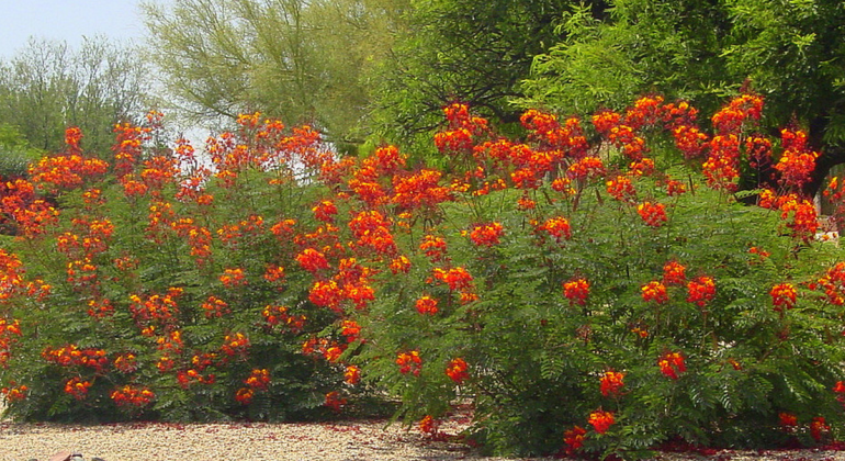 Great Design Plant- Red Bird-of-Paradise - other - Noelle Johnson Landscape Consulting