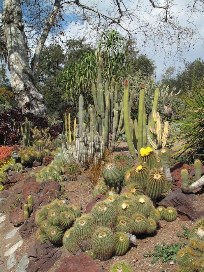 Janet-Hall-Huntington-Desert-Garden-Cactus