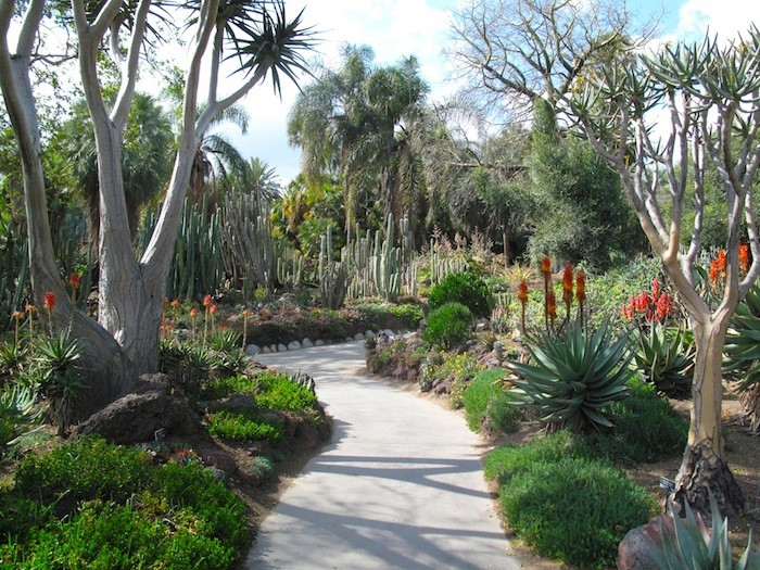 Janet-Hall-Huntington-Desert-Garden--path