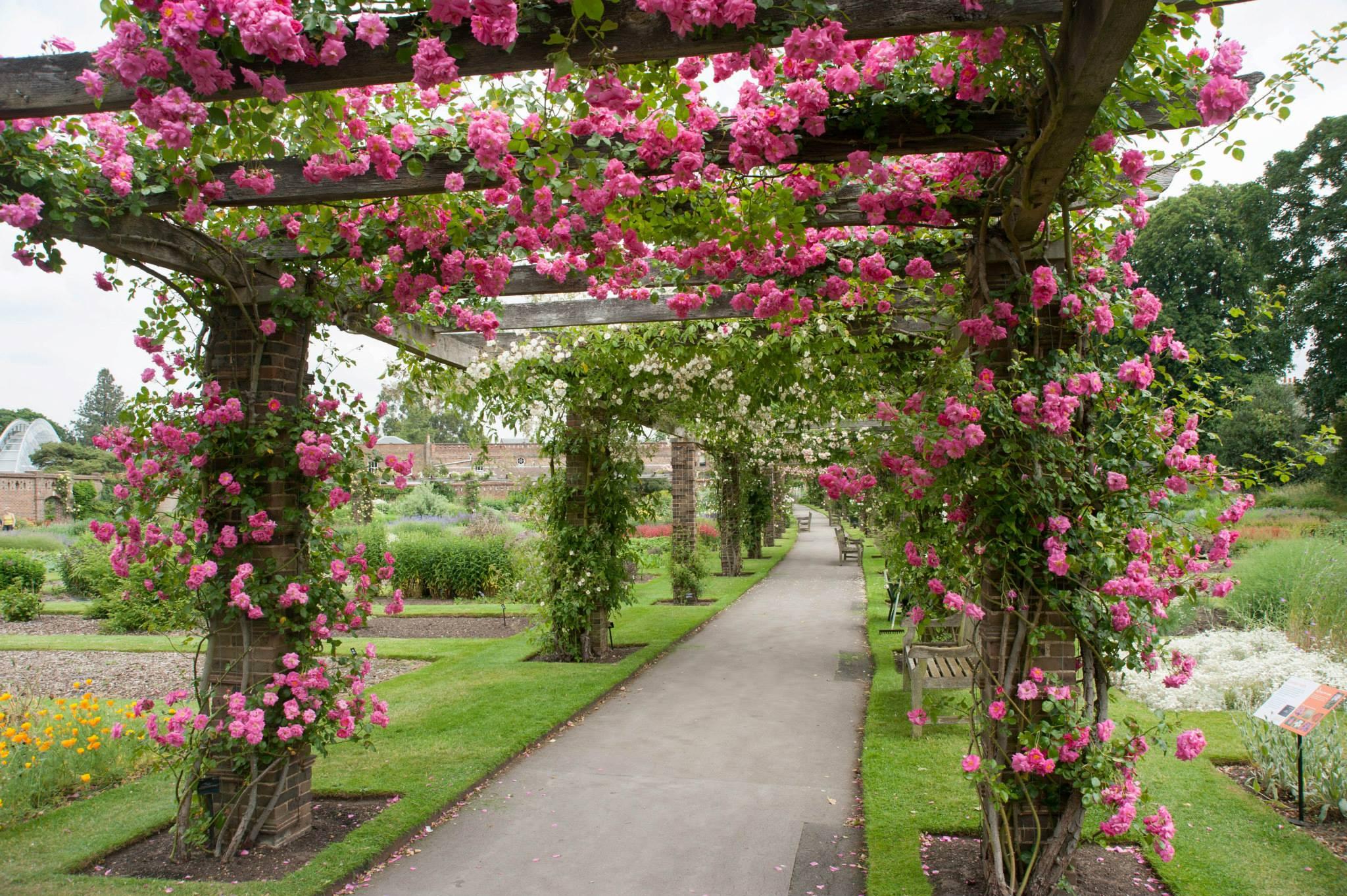 De rozen van kew gardens tuinenstruinen org - Eigentijds pergola design ...