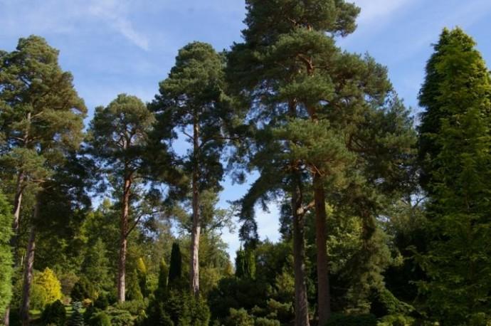 Pinetum Hilversum bron ;Nederlandse Tuinenstichting