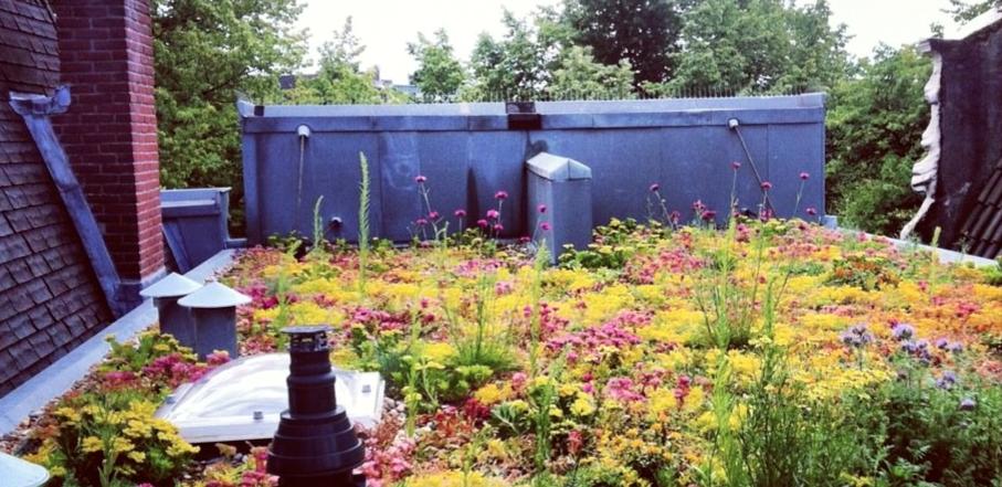 Amsterdamse sociale huurwoningen krijgen slimme blauw-groene daken