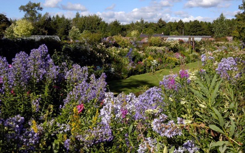 Summer border Carnell Gardens Hurlford Ayrshire Scotland