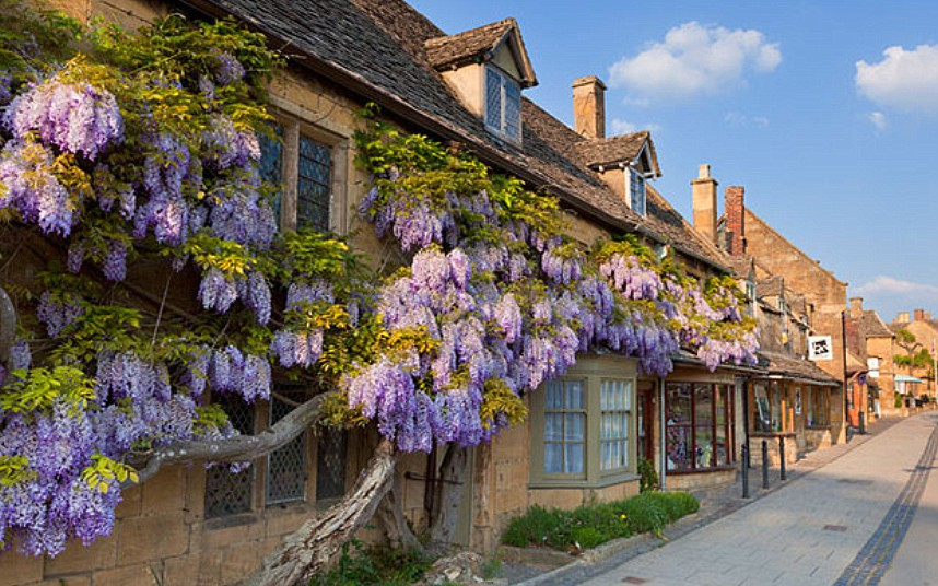Purple flowering wisteria on a Cotswold stone,wall in the village of Broadway, The Cotswolds, Worcestershire, England, UK