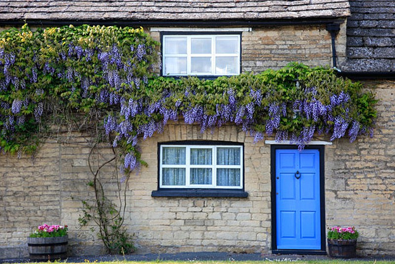 Stone Built Thatched Wisteria Cottage Barnack village Cambridgeshire County England Britain UK