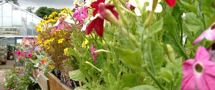Het tuincentrum van Floors Castle (roxburghe.net)