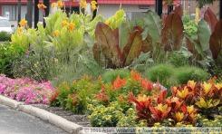 Ensete ventricosum 'Maurelii', Canna 'Tropicana Gold', Petunia 'Vista Bubblegum', Cyperus papyrus, Ruellia brittoniana, Codiaeum variegatum 'Petra', Lantana 'New Gold', Celosia 'Fresh Look Orange'