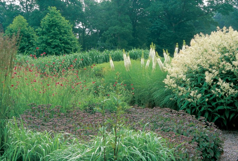 Many different varieties of grasses.