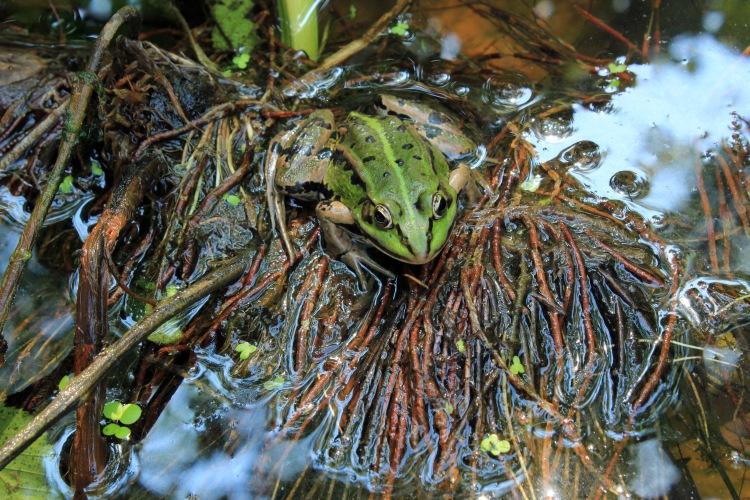 Water zorgt ook voor een grotere biodiversiteit in de tuin.