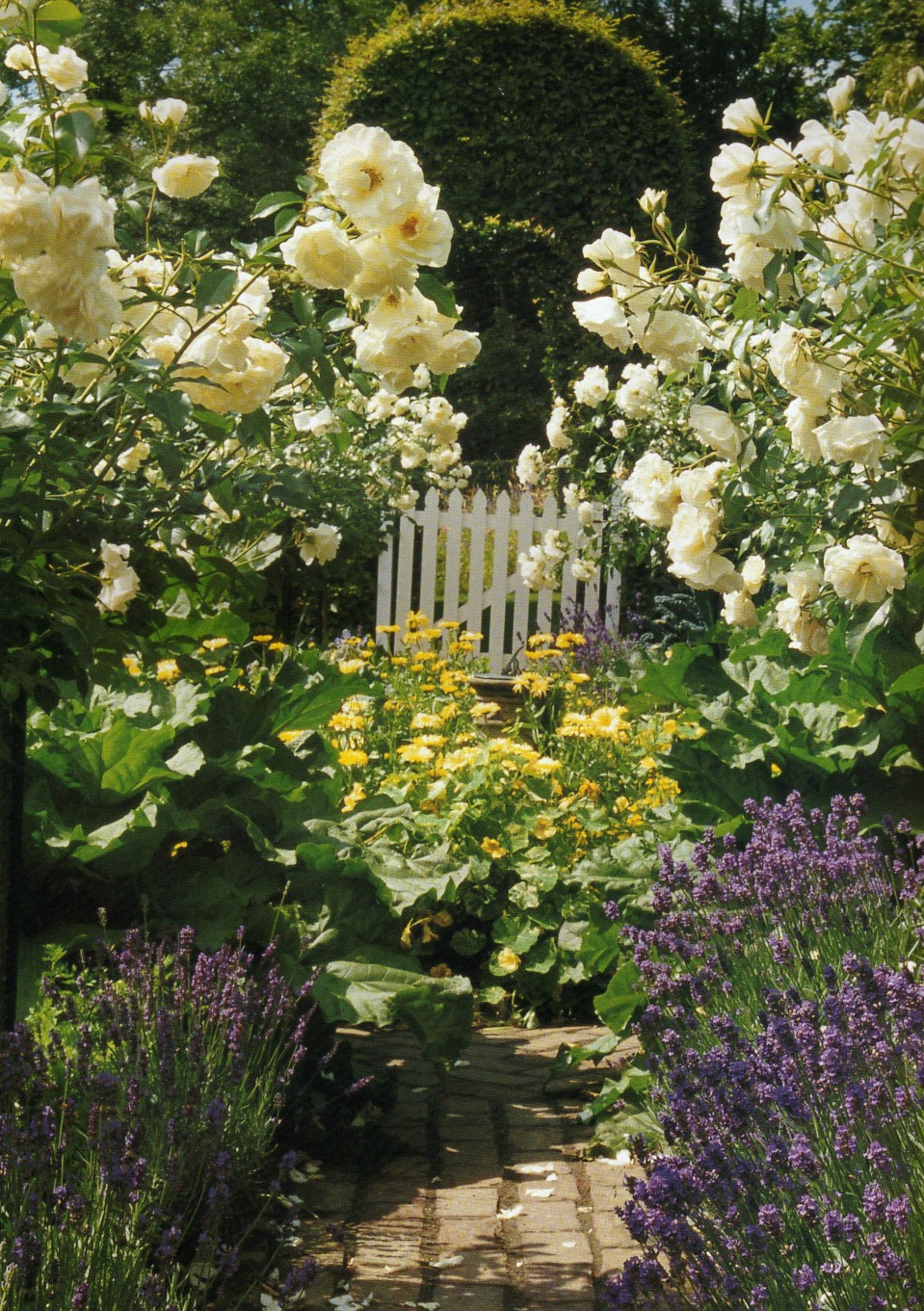 Kruidentuin - Herb Garden.