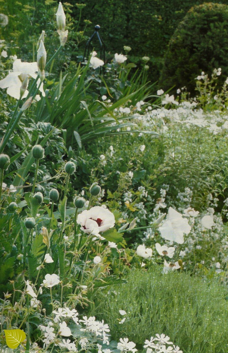 De witte tuin.