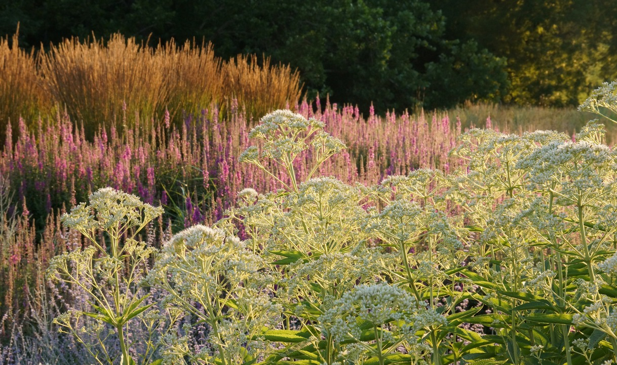Adam woodruff jones road prairie garden for Prairie style garden design