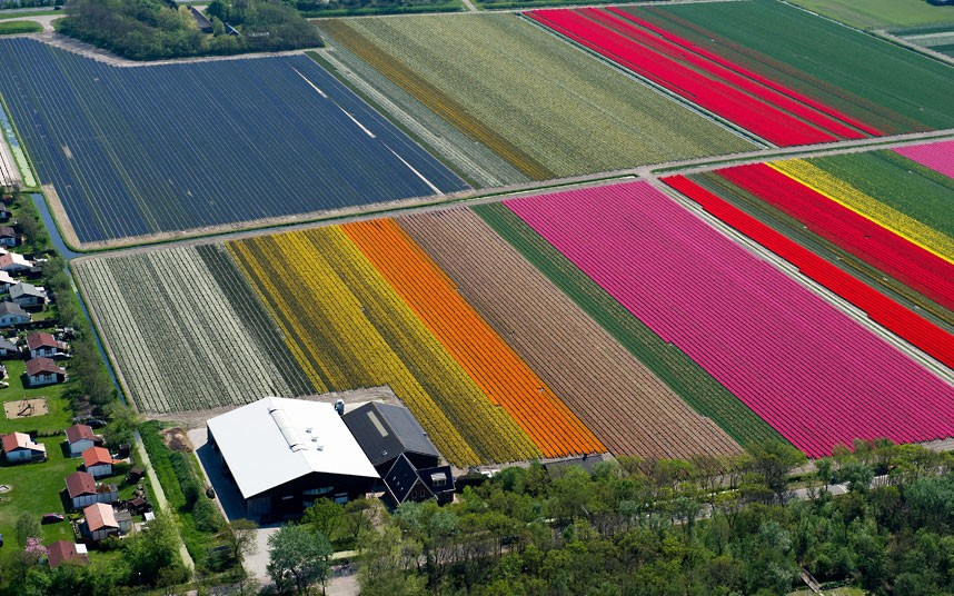 tulip-fields_2470264k