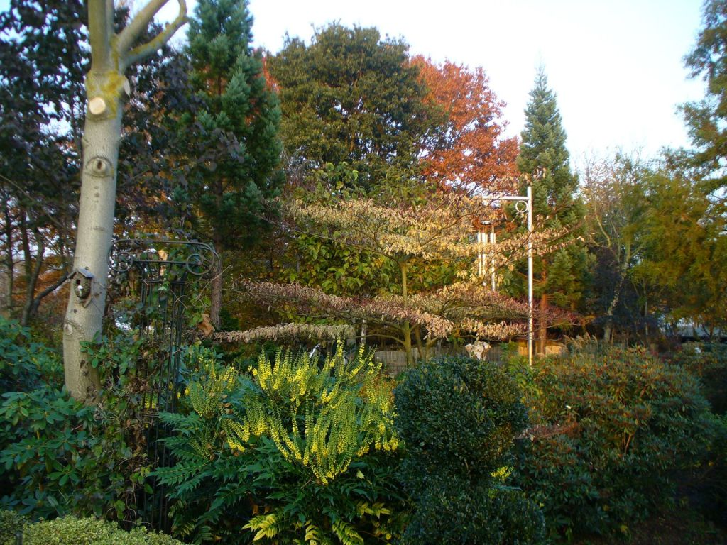 Many trees and conifers in the garden.