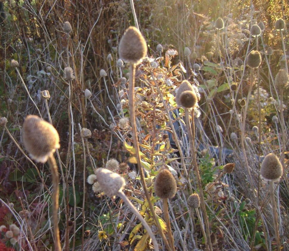 www.prairierosegarden.com