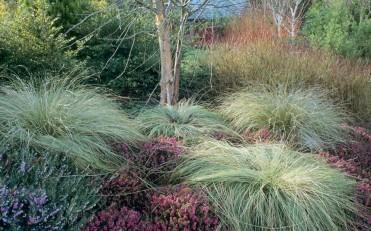 rhs.org.uk/Gardens/Rosemoor