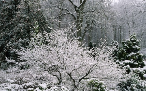 rhs.org.uk/Gardens/Harlow-Carr