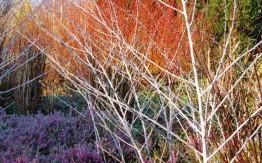 botanic.cam.ac.uk