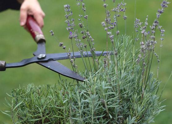 Buitenleven Relaxen Lavendel : Posts tagged as buitenleven picbear
