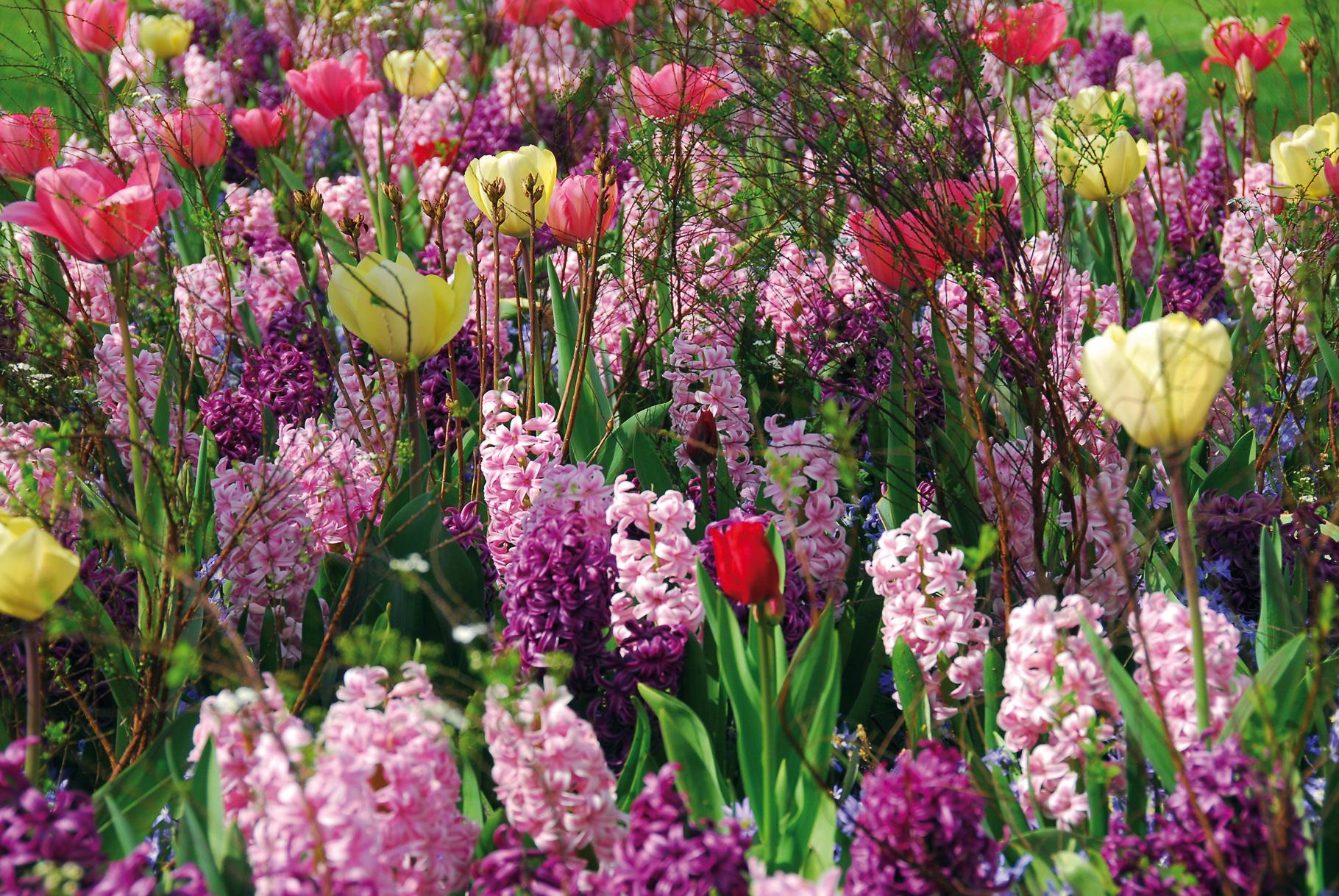 Bollen Bloeiend Voorjaar : Het bloeiseizoen verlengen met bloembollen u tuinenstruinen