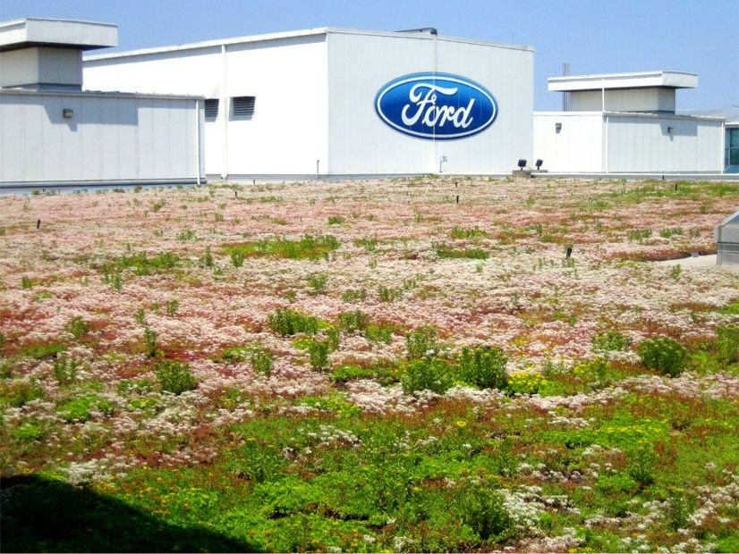 Het groendak van Ford Motor Company in Dearborn Michigan was bij de oplevering in 2003 het grootste van Amerika.