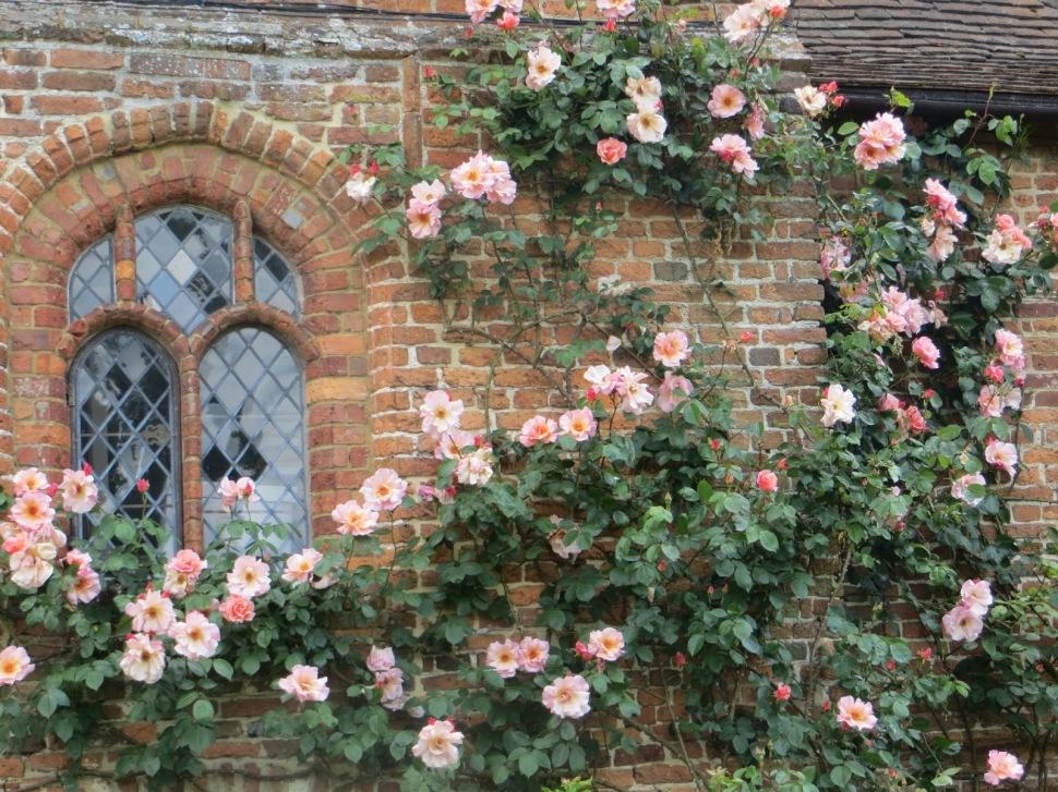 sissinghurst roses
