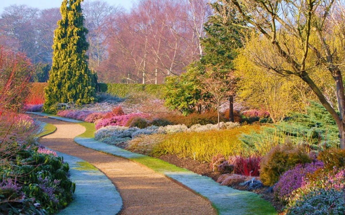 Kleur in de wintertuin. – tuinenstruinen.org