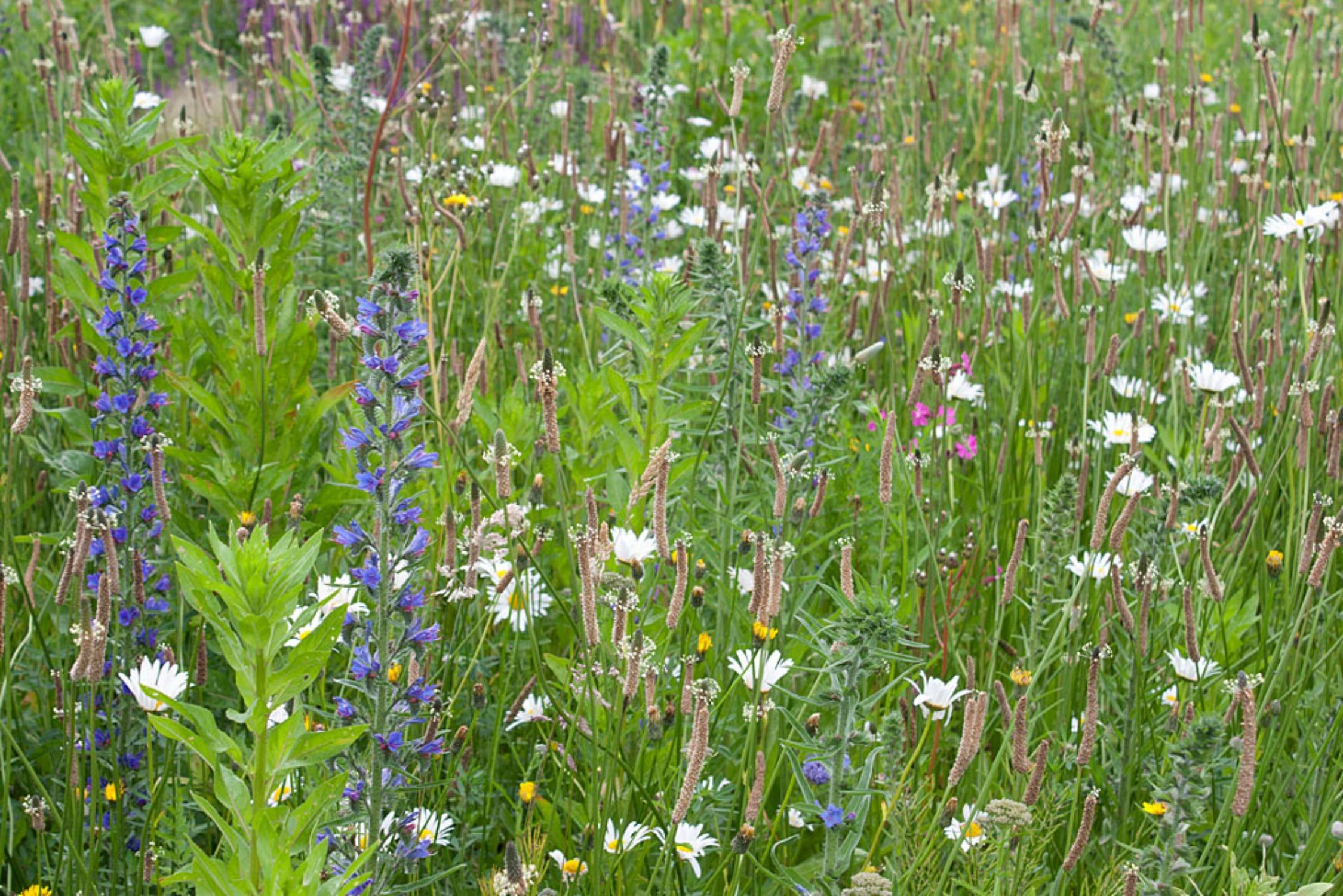 GO WILD! 6 – Een Wilde Bloemenweide in uw tuin.