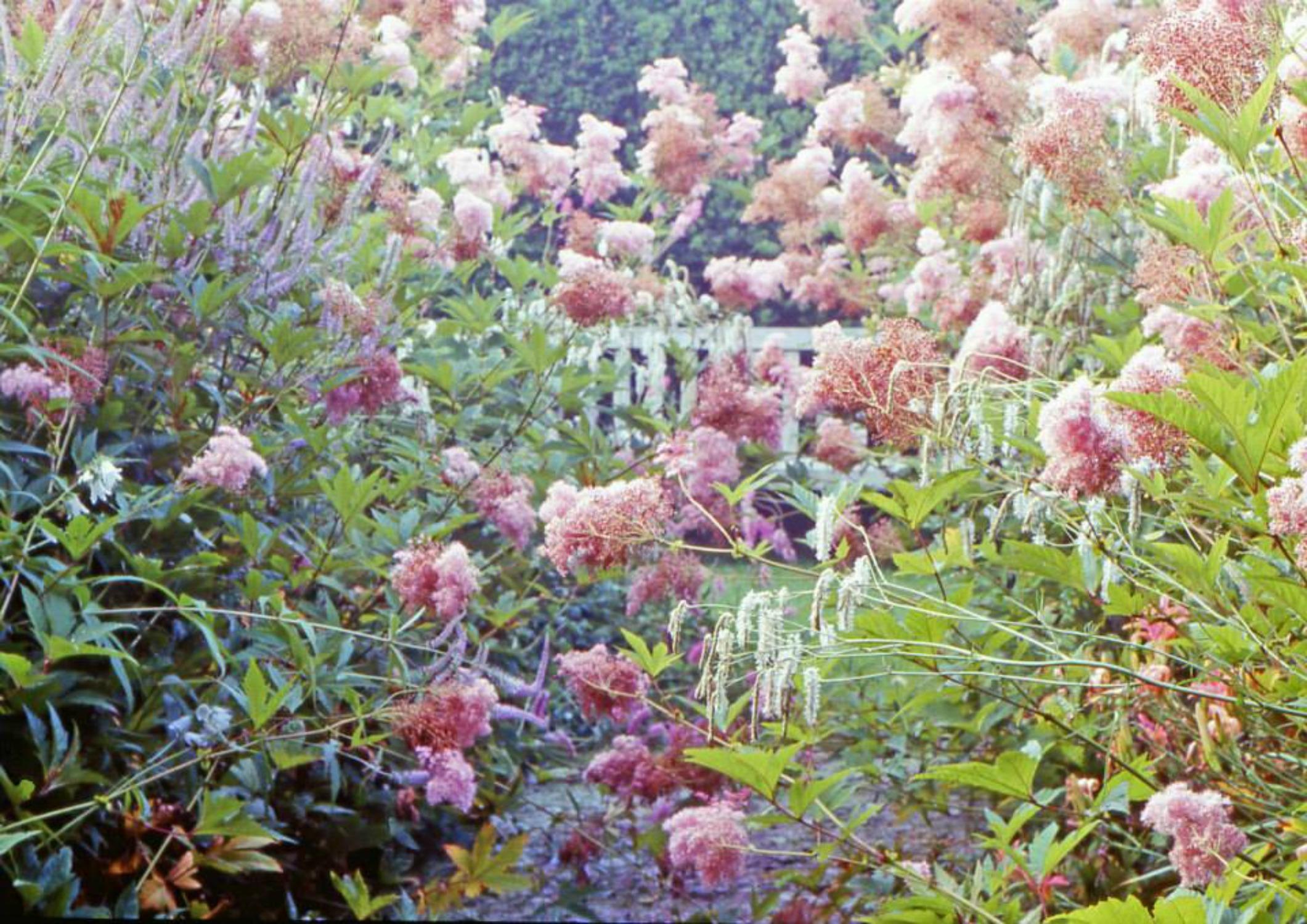 Ton ter Linden – Tuinieren met ziel en zaligheid