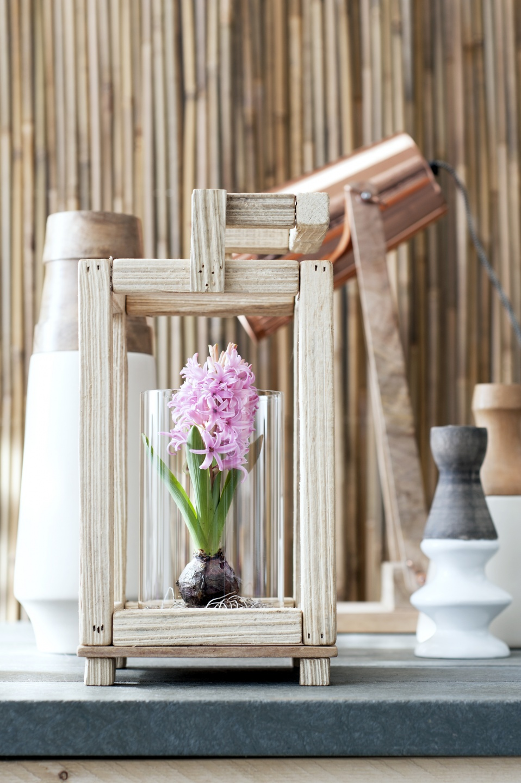 12.hyacint.10_0