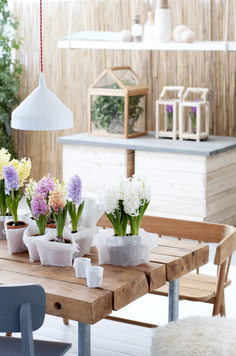 12.hyacint.3