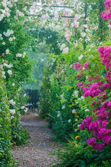 De rozenpergola in juli